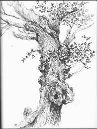 sally sanders calligraphy u0026 design oak trees tree sketches