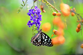 animals berries blurred butterflies flowers insects nature walldevil