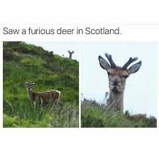 Oh Deer Meme - oh deer meme guy