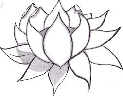 lotus pencil sketch learn to draw flowers of all kinds from