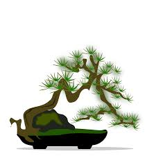 image bonsai tree clipart cliparts and others art inspiration