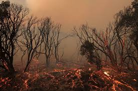 Definition For Wildfire by What Is Climate Change The Definition Causes And Effects Wired Uk