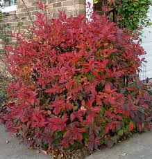 29 plants fall color winter interest images