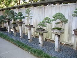 Huntington Botanical Gardens Pasadena by 24 Best Huntington Bonsai Images On Pinterest Bonsai Trees