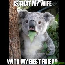 My Best Friend Meme - is that my wife with my best friend meme koala cant believe it