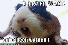 Shaved Guinea Pig Meme - meme center best guinea pig board pinterest meme center