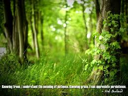 meaning of trees knowing trees i understand the meaning of patience knowing grass