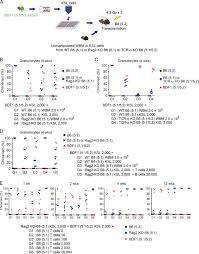 multiple allogeneic progenitors in combination function as a unit