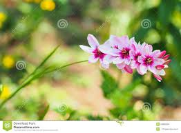 nice flower closeup in the garden during day time stock photo