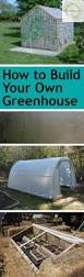 how to build your own greenhouse bless my weeds