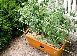 charming growing vegetables in a small space and decorating spaces