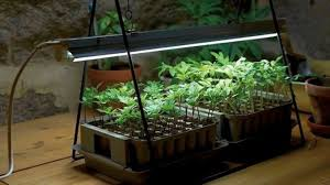 where to buy indoor grow lights best led grow lights for indoor plants