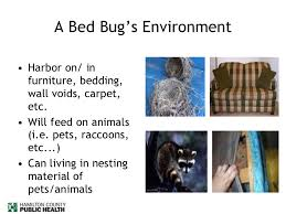Living With Bed Bugs How To Deal With Bed Bugs