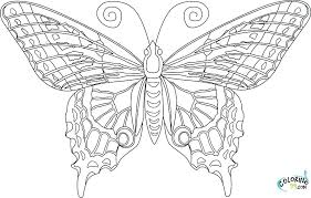 coloring pictures of small butterflies small butterfly coloring pages everychat co
