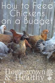198 best backyard chickens images on pinterest backyard chickens