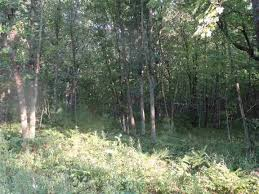 iola wi land for sale homes com