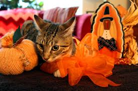 thanksgiving is for kitties cat tales