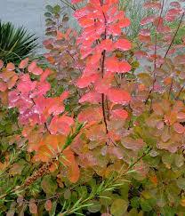 Flowering Shrubs For Partial Sun - 194 best plant profiles u0026 portraits images on pinterest plant