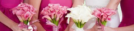 blooming flowers flowers