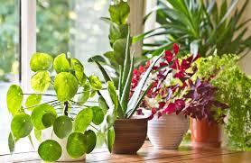 benefits of houseplants 15 houseplants and their amazing health benefits houseplant