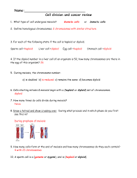 How Many Chromosomes Does A Somatic Cell Have Meiosis Review Worksheet