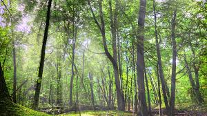 wallpaper for smart pnone wood green free stock photos plant