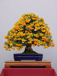 30 of the most beautiful bonsai trees bonsai gardens and