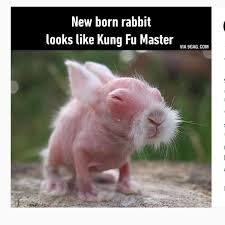 Kung Fu Meme - new born rabbit looks like kung fu master martial arts and