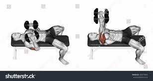 dumbbell bench press lying down your stock illustration 425575603