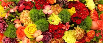 wholesale flowers dreisbach wholesale florists