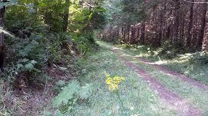 Washington vegetaion images Washington vegetation management services llc cinebar