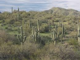 Arizona vegetaion images Plant communities jpg