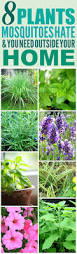 8 amazing plants that u0027ll repel mosquitoes and other pests