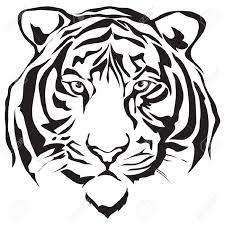 tiger head stock photos images royalty free tiger head images and