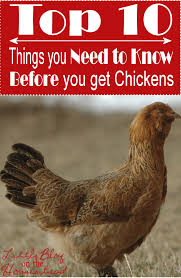 10 things you must know before getting chickens