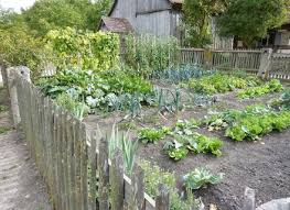 Fall Vegetable Garden Ideas Garden Designs Small Veggie Garden Design 25 Beautiful Small