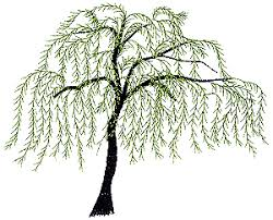 best 25 willow tree tattoos ideas on weeping willow tree designs
