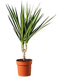 indoor plant mix 3 plants house office live potted pot plant