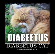 Diabetes Cat Meme - diabetes after spider bite off topic forums t nation