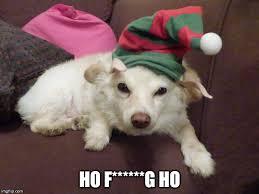Annoyed Dog Meme - annoyed dog imgflip