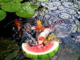 How To Make A Koi Pond In Your Backyard Best 25 Ponds Ideas On Pinterest Pond Ideas Backyard Ponds And