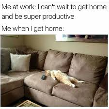 Lazy Meme - 19 memes to laugh at while you pretend to have work life balance