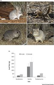 is reintroduction biology an effective applied science trends in
