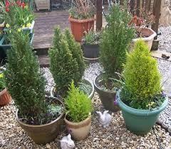 growing trees in pots seasonal gardening