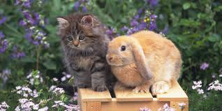 cats and bunnies are our new favorite bffs huffpost