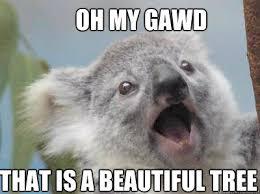 High Koala Meme - koala memes google search funny stuff pinterest puppys