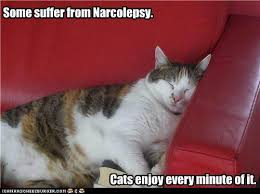 Narcolepsy Meme - funny pics about narcolepsy funny pictures some suffer from