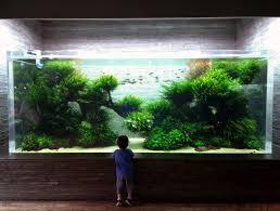 amano aquascape seahorse aquariums now suppling ada in ireland seahorseaquariums