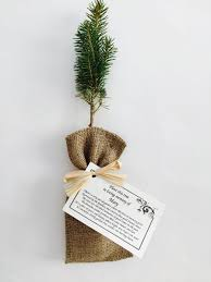 Condolence Gift Ideas What An Awesome Funeral Gift Have Friends And Family Grow Trees
