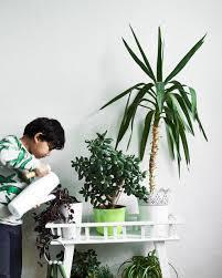 kids rooms gardening green homes